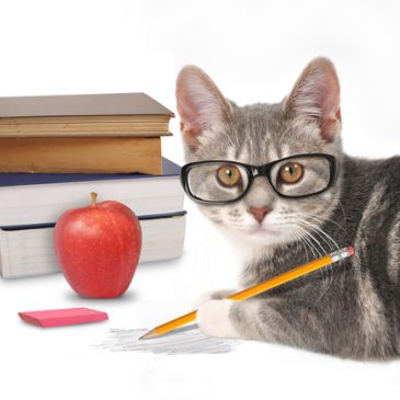 How Students Are Like Cats